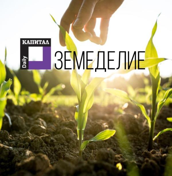 Тимак Агро в сп. Земеделие, Капитал