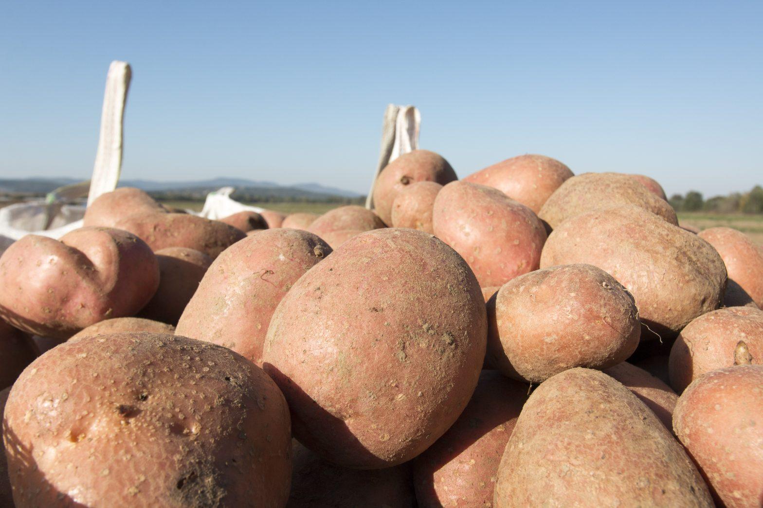Отлични резултати с Timac 42 при картофи