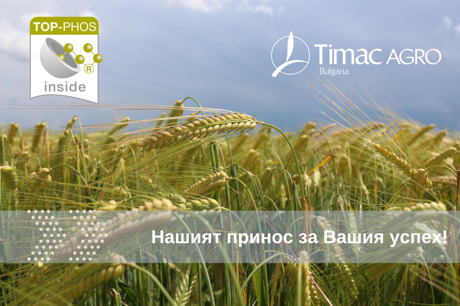 Успешна технология с TOP-PHOS, пшеница