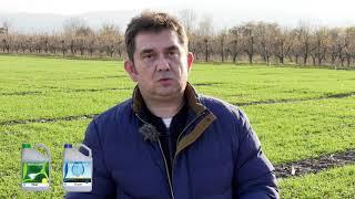 Опити с лавандула на Тимак Агро в АУ Пловдив
